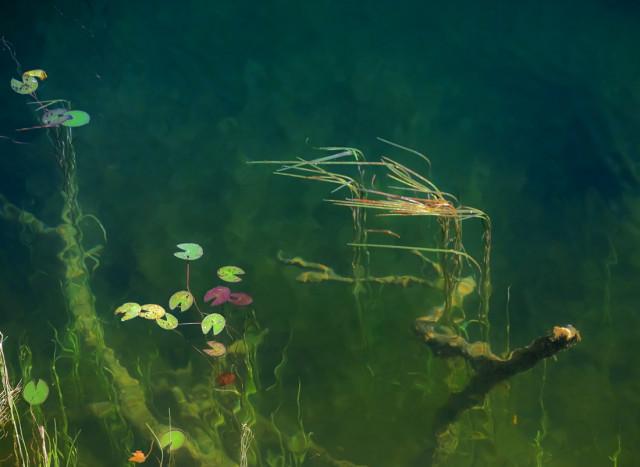 Озёра в окрестностях Сычёво пока ещё чисты...